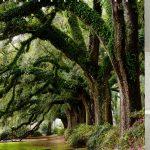 Style Frais Forest Trees Avenue Imprimer Rideau de douche …